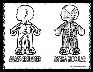 Fantásticos Diseños De Los Sistemas Y Aparatos Del Cuerpo Humano