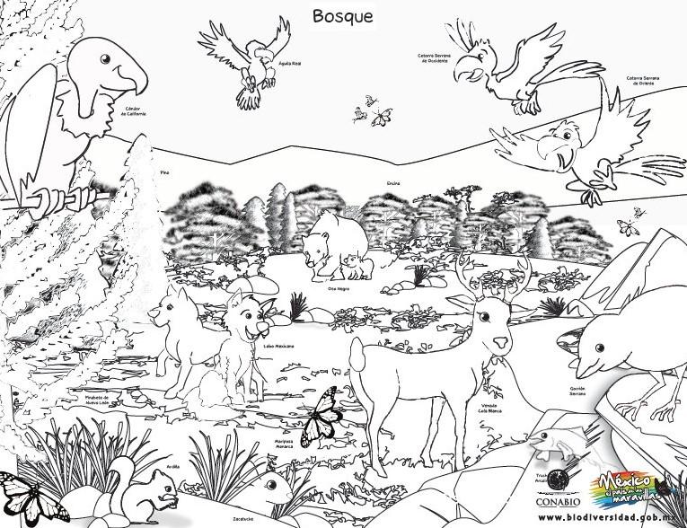 Dibujos De Animales Terrestres Para Colorear E Imprimir: Espectaculares Dibujos De Los Ecosistemas